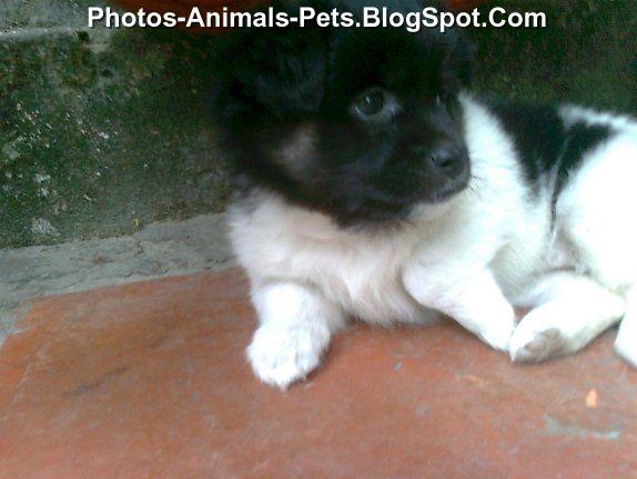 Pics of puppies