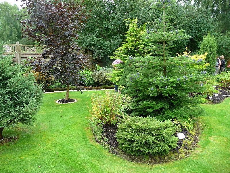 fina buskar till trädgården