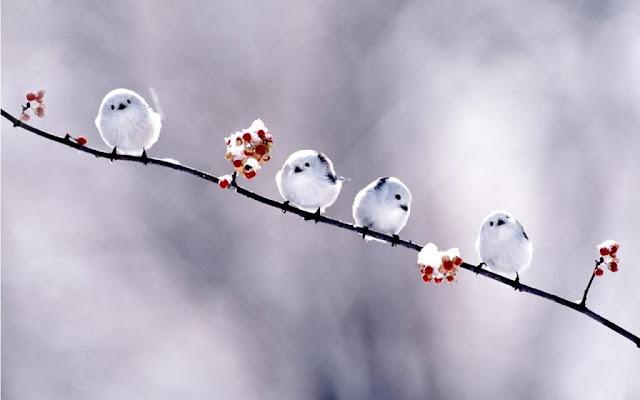 Little White Bird Wallpaper