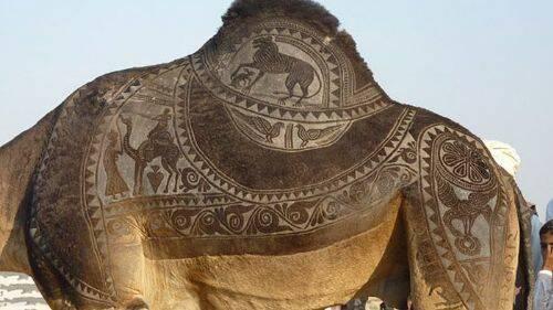 arte-camello-6.jpg