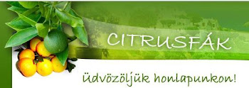 www.citrusfa.hu