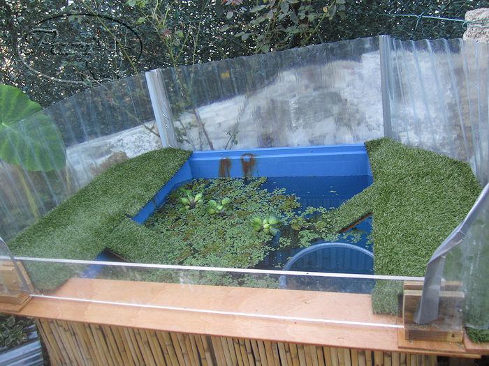 Ver tema ya tengo mi estanque para mis - Como construir un estanque para tortugas ...