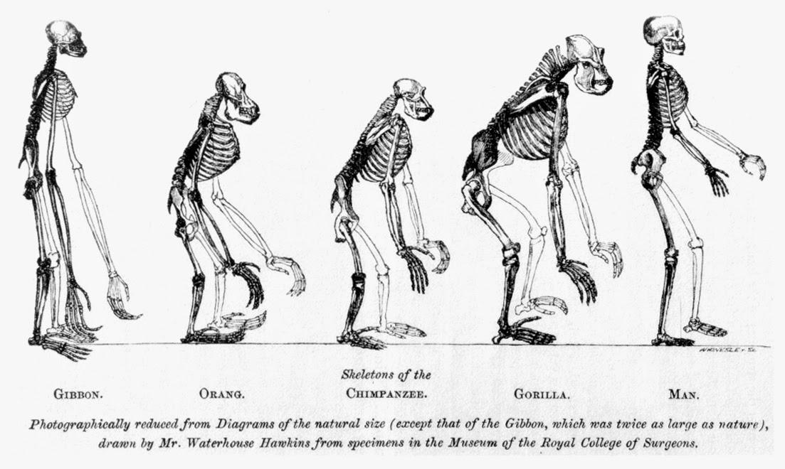 Evidencias de la evolución | Apuntes de Evolución