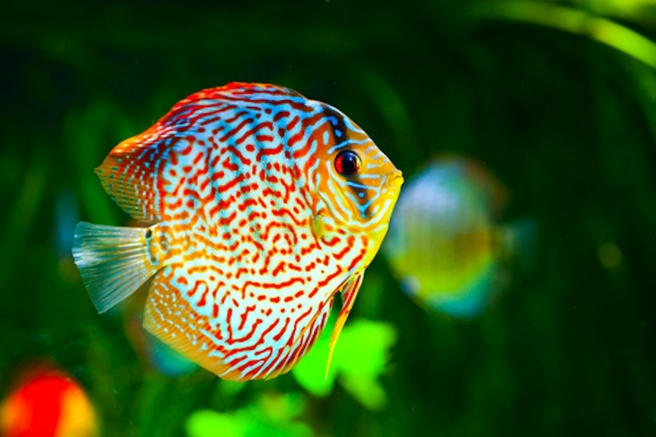 Golden Eye View Top 15 Most Beautiful Fishes Of The World
