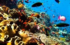 tour to save bunaken national park