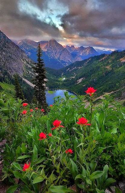 wildflowers and a view of Lake Ann, North Cascades National Park, WA ♥