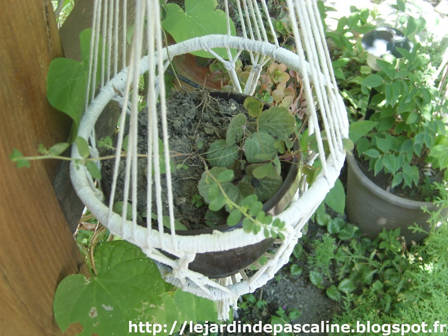 Le jardin de pascaline il faut penser la rentr e des plantes - Bouture de l hibiscus de jardin ...