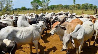El gobierno controlará distribución y comercialización de la carne