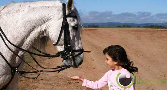 Kuda Terapis (Therapy Horses)