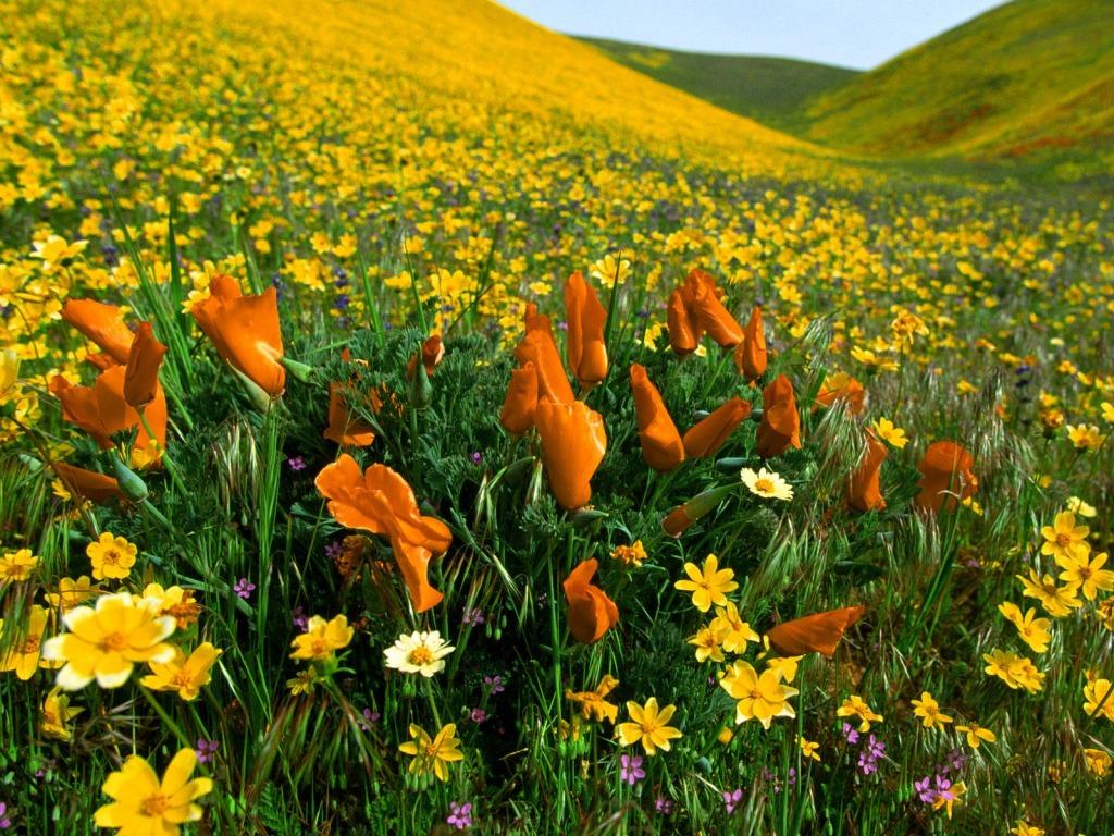 Proljetno cvijeće - download besplatna pozadina za desktop priroda