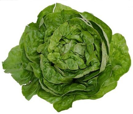 How to Make Soggy, Wilted Lettuce & Other Leafy Greens Edible ...