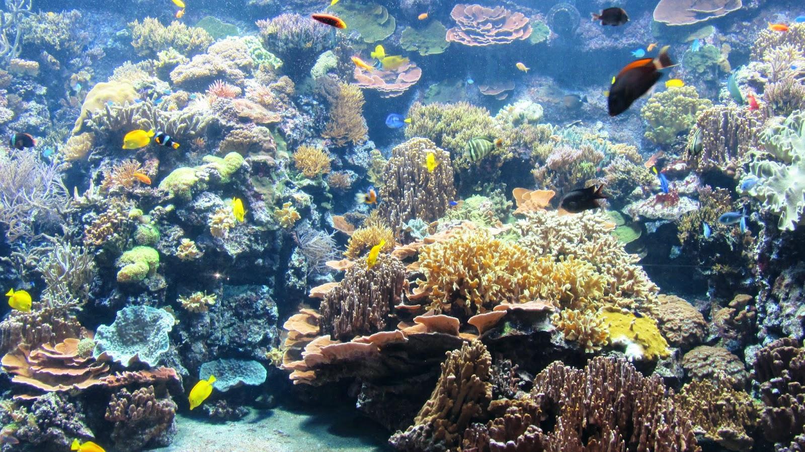 Aquarium, zoo,