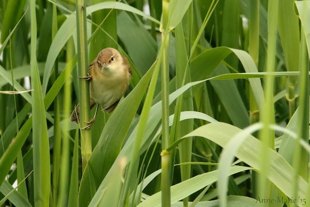 http://puurnatuur-foto.blogspot.nl/