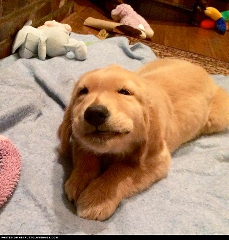 puppy smiling - pinterest
