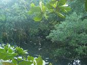 """""""Pois, será como árvore plantada, junto a ribeiros de água. Salmo 1:3a"""