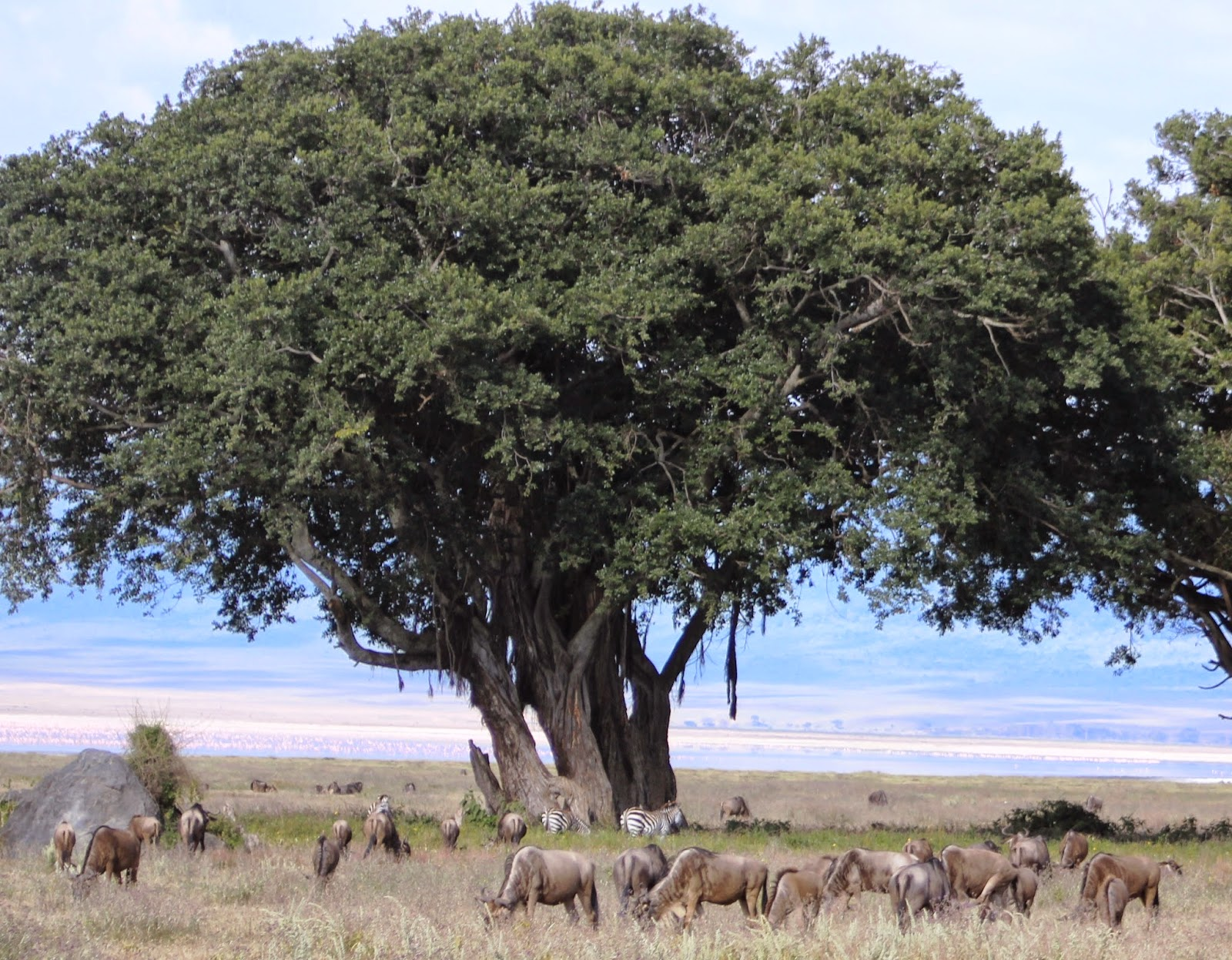 Souvenir Chronicles Africa Ngorongoro Crater Part 1