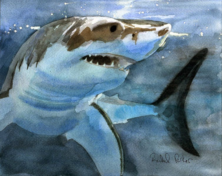 Shark Paintings For Sale