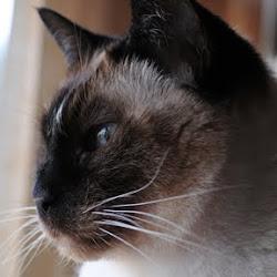 Miao Yin