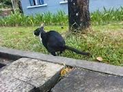 Petua Elak Kucing Buang Air Di Kawasan Rumah