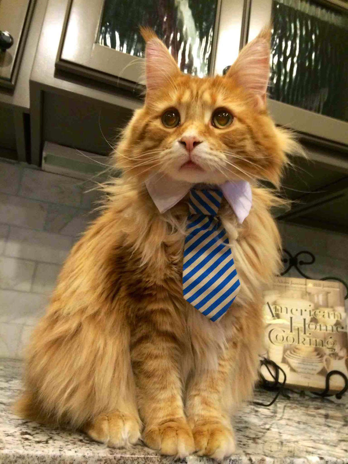 Funny cats - part 99 (40 pics + 10 gifs), cat pictures, beautiful cat wears tie