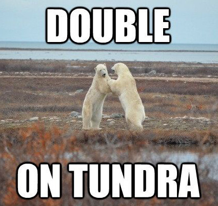 Two polar bears on tundra (the double on tundra)