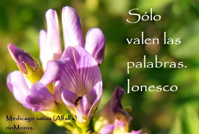 Frases de Ionesco