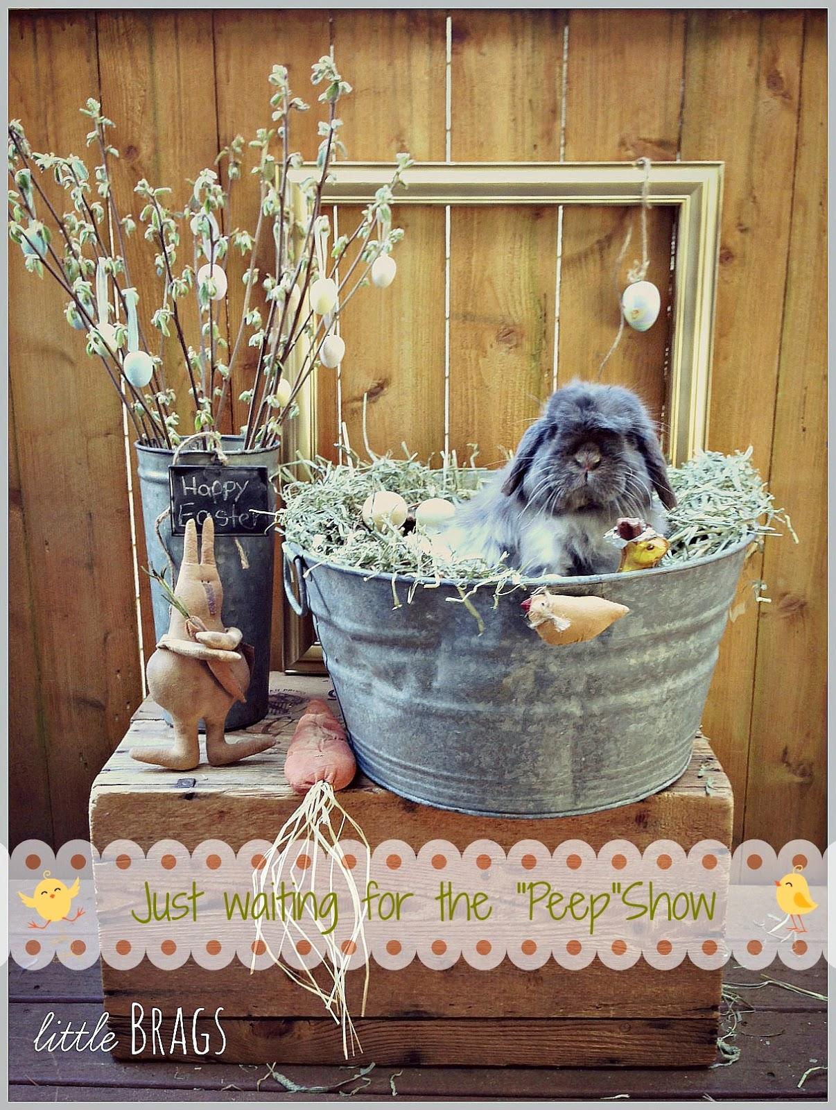 http://littlebrags.blogspot.com/2014/04/serious-cuteness-alert-real-easter-bunny.html