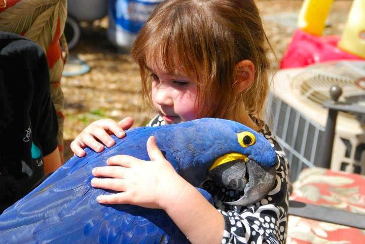 awesome animals blog macaw sharing hugs and love with a girl. Black Bedroom Furniture Sets. Home Design Ideas