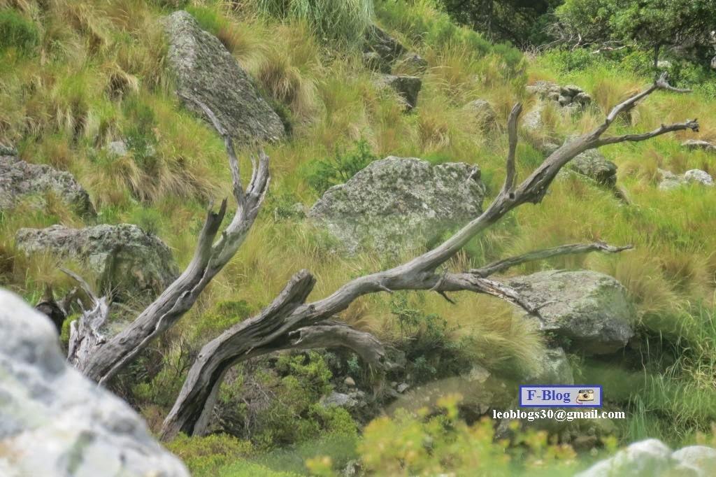 Paisaje y naturaleza muerta, Merlo, San Luis