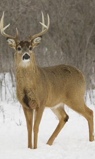 Android phones wallpapers android wallpaper deer - Hunting wallpaper for android ...