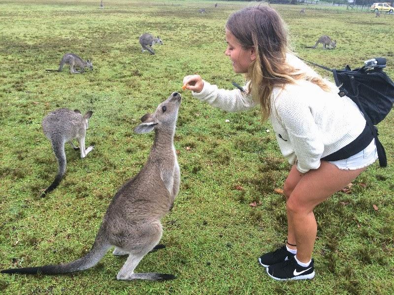 Road trip to feed the kangaroos in Morisset, Sydney