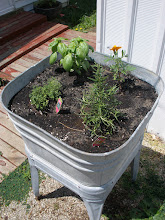 Herb Garden