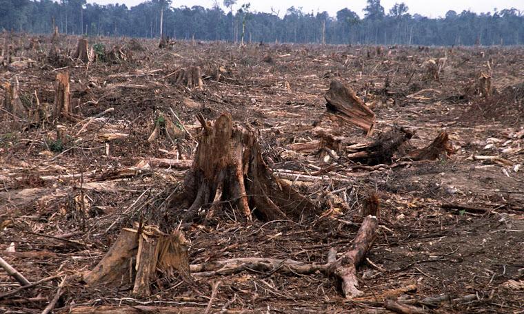 dangers of deforestation