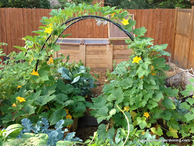 Squash arch in bloom