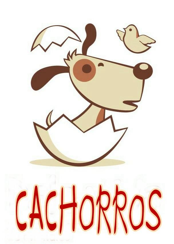 CACHORROS PARA ADOPTAR - PUPPIES