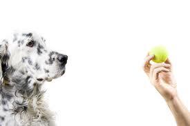 Curso de educador y adiestrador canino