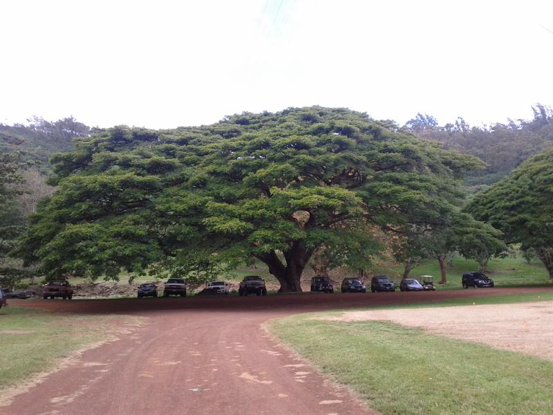 To Kauai Tropical Gardening 101