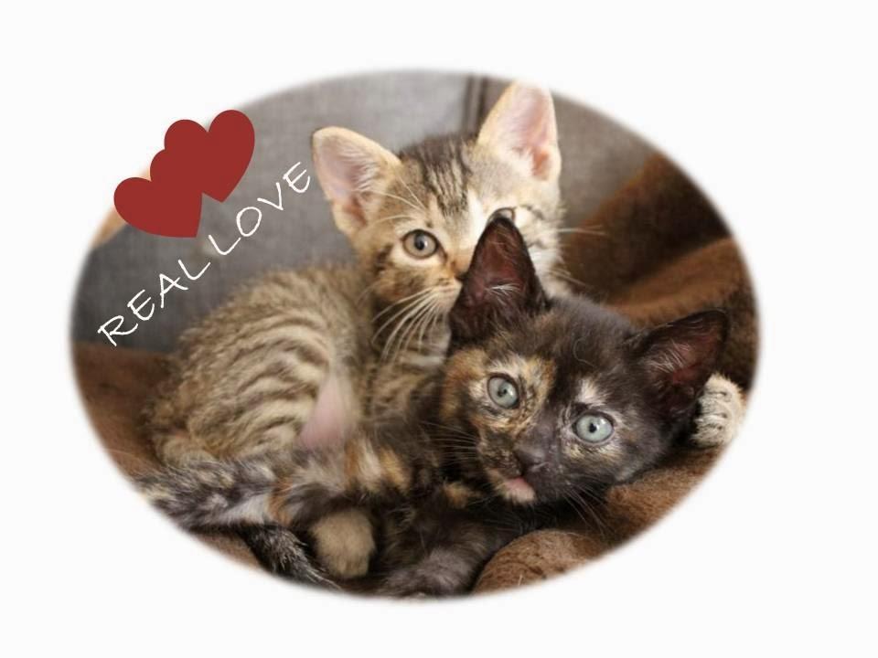 Rita y Audrey de bebes, hermanas gatitas, real love