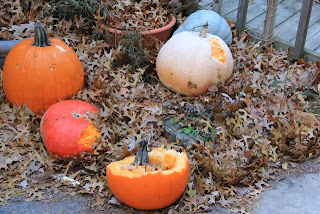 deer-munched pumpkins