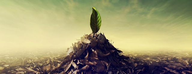 growing leaf hope facebook cover