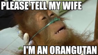 please tell my wife im an orangutan