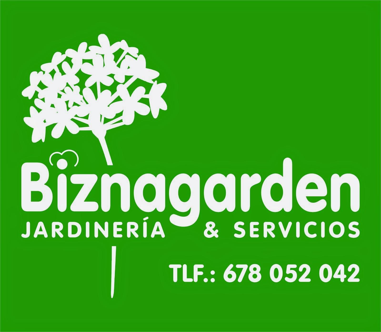 Como salvar su flor de pascua o poinsettia euphorbia - Empresas de jardineria en malaga ...