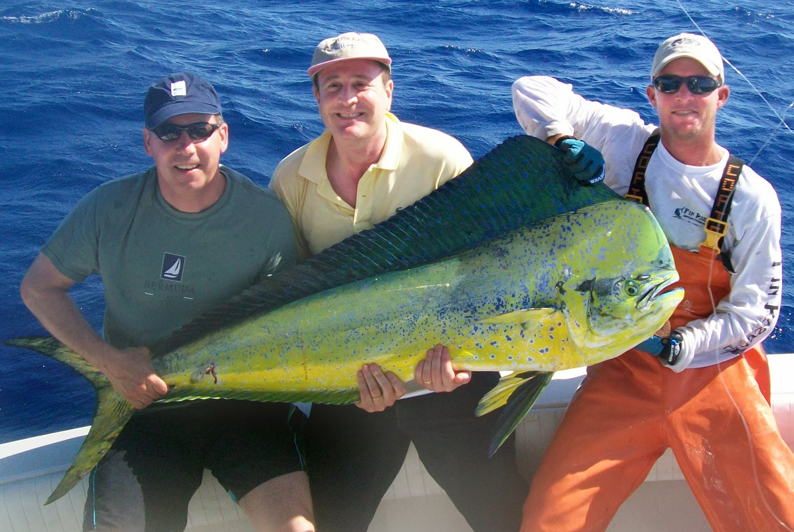 mahi mahi fishes world hd images free photos