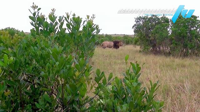 África Extraordinaria 1080p HD Latino