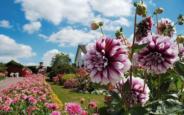 Foto met een tuin vol mooie bloemen
