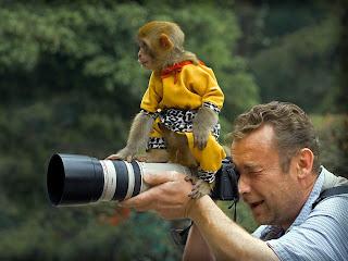 Funny Spider Monkey