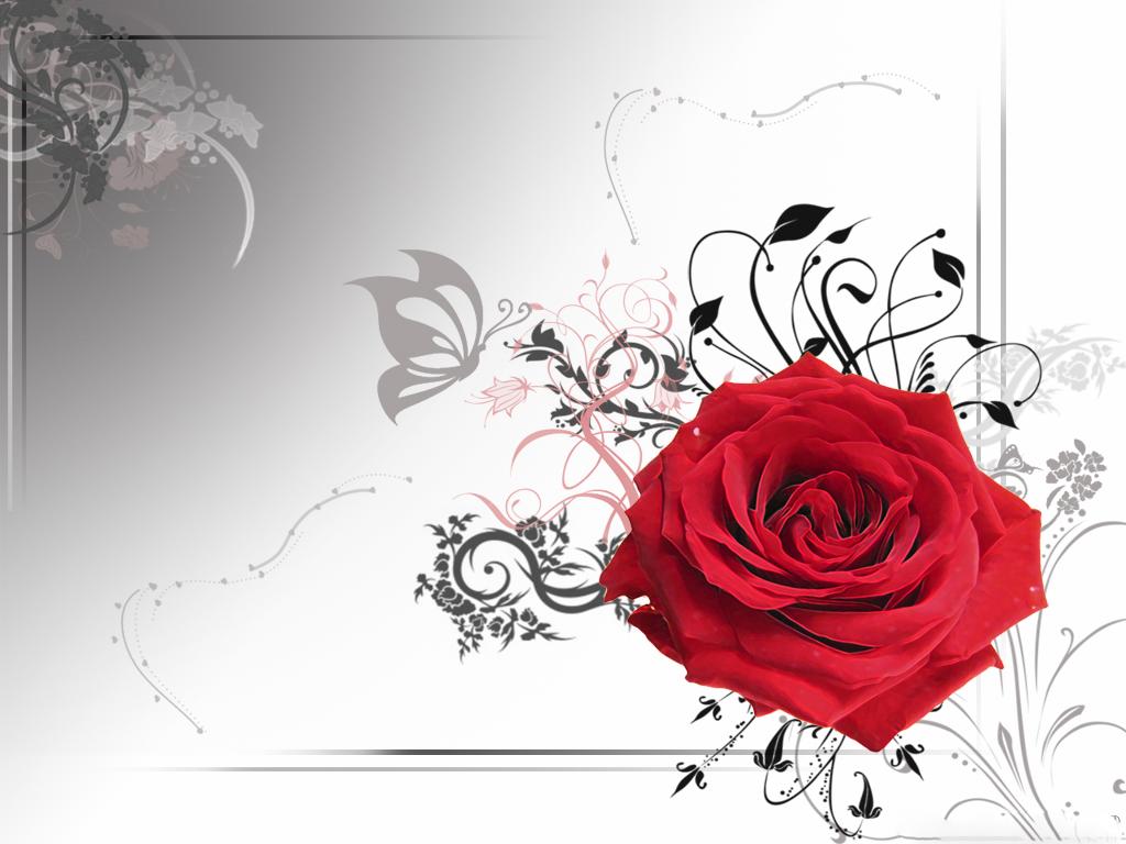 http://2.bp.blogspot.com/-2CTLYsmvtaw/Tu49eYWg58I/AAAAAAAADmg/PmYp8wOjlzE/s1600/lovely+red+rose+wallpaper+1-www.wallpaperjug.blogspot.com.jpg