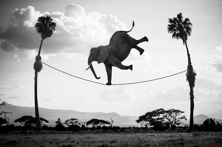 elefante haciendo equilibrio en la cuerda floja entre dos arboles