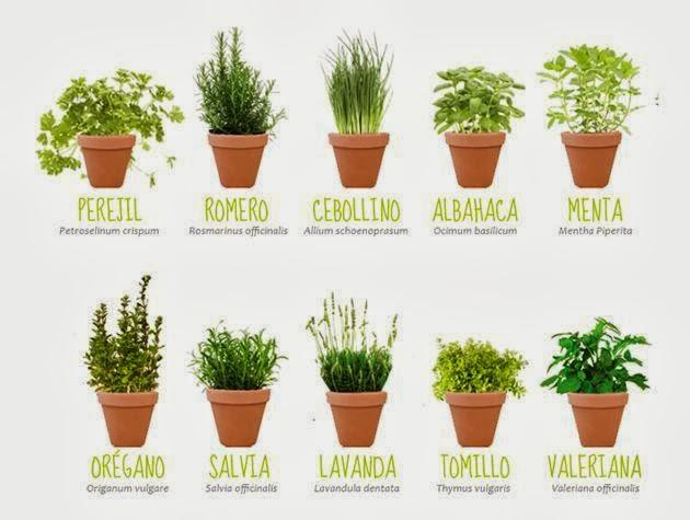 Ps del prado las plantas arom ticas que perfuman mejor - Plantas aromaticas en casa ...