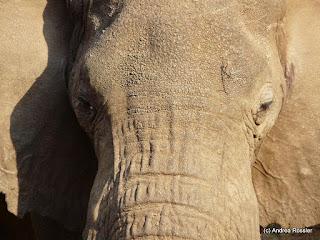Reisen Afrika Tansania Manyara Nationalpark